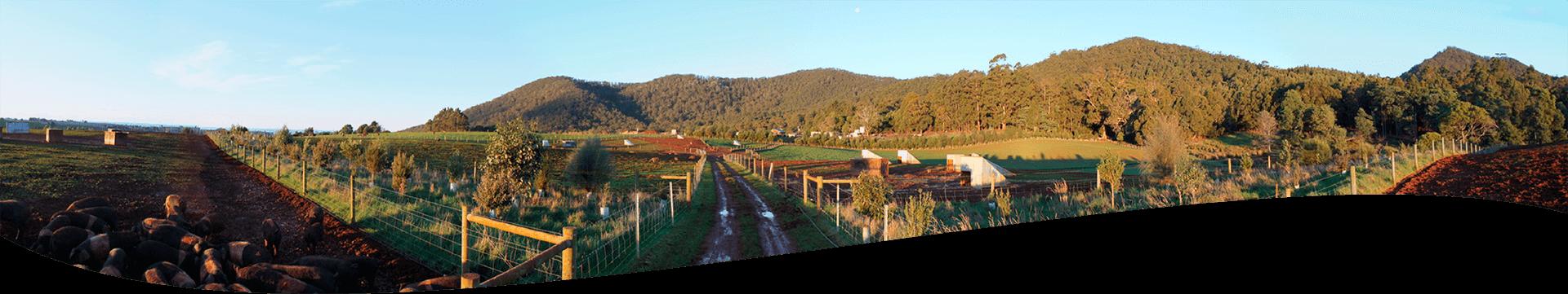 Mt Gnoman Farm